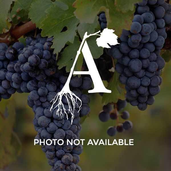 Frontenac Blanc Grapevines