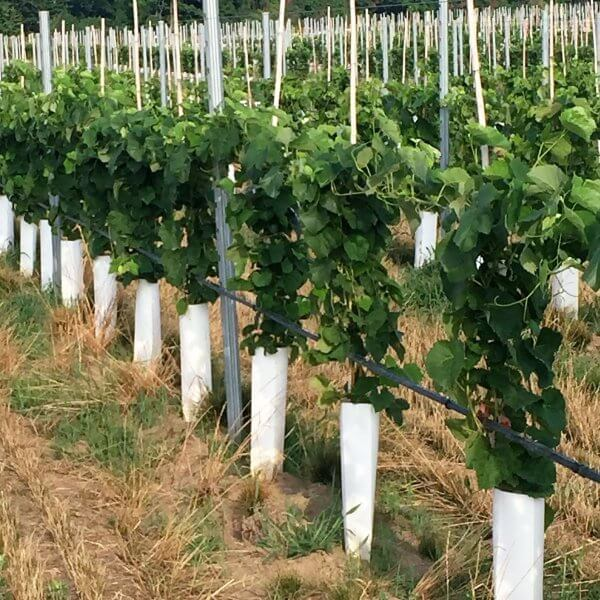 Zipset™ Tree and Vine Wraps