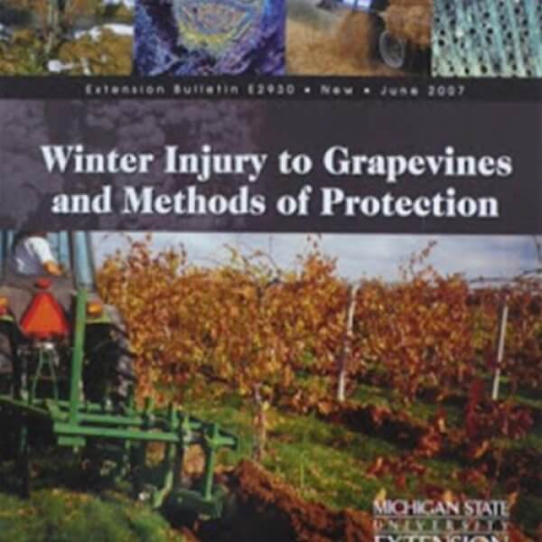 Winter Injury to Grapevines and Methods of Protection